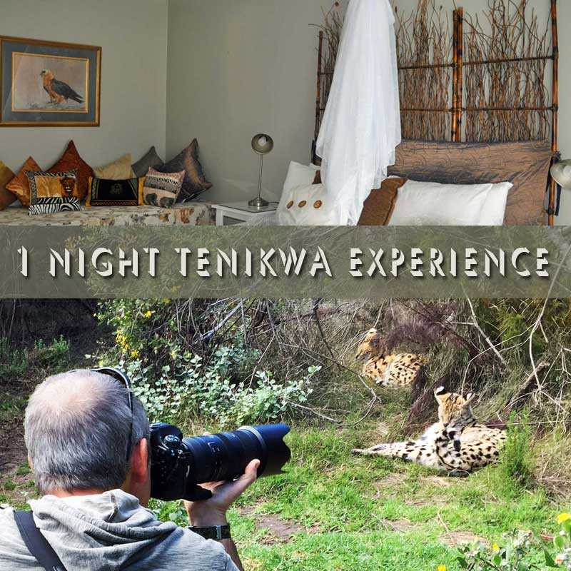 1 Night Tenikwa Experience