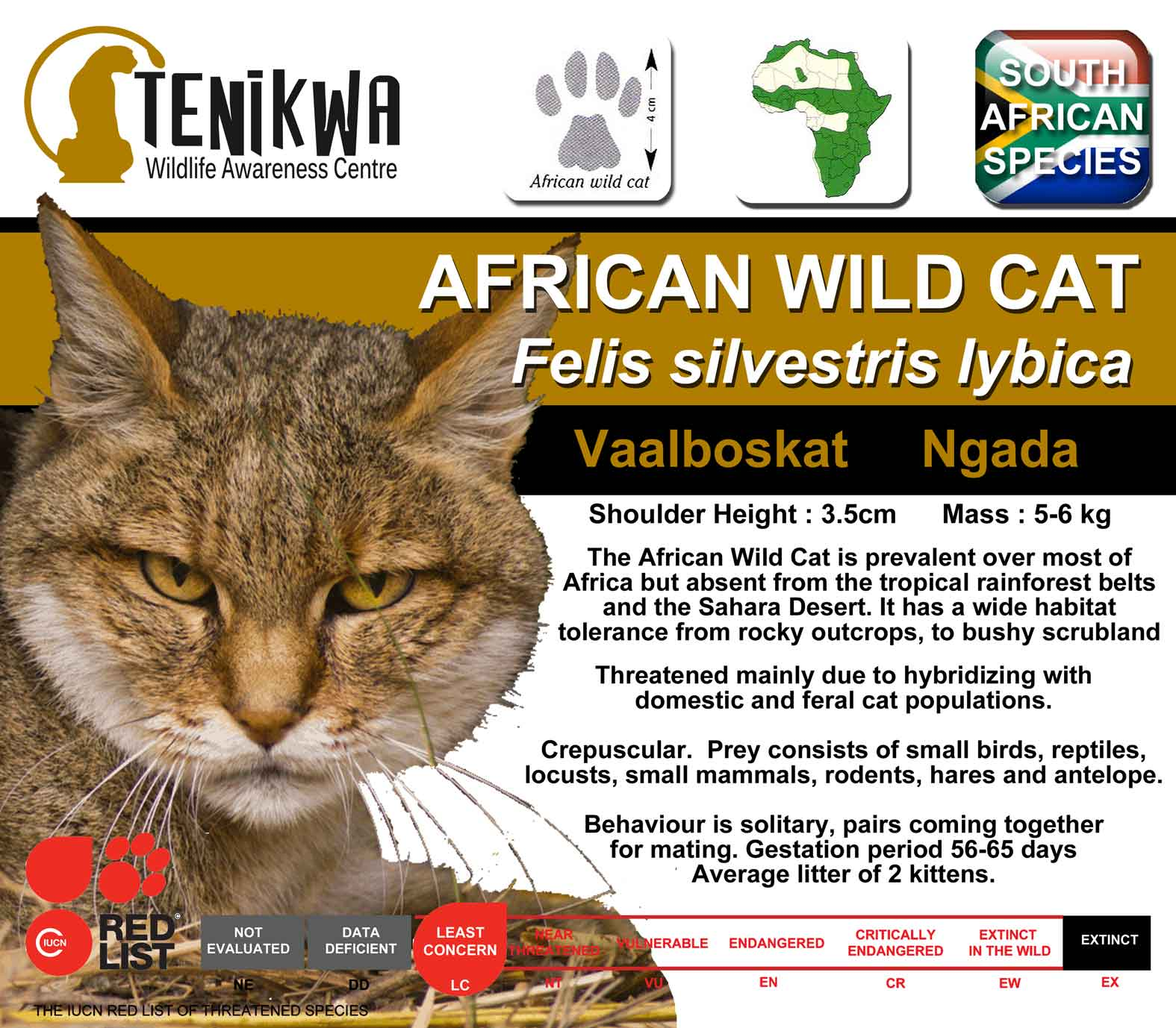 African Wild Cat Information Board