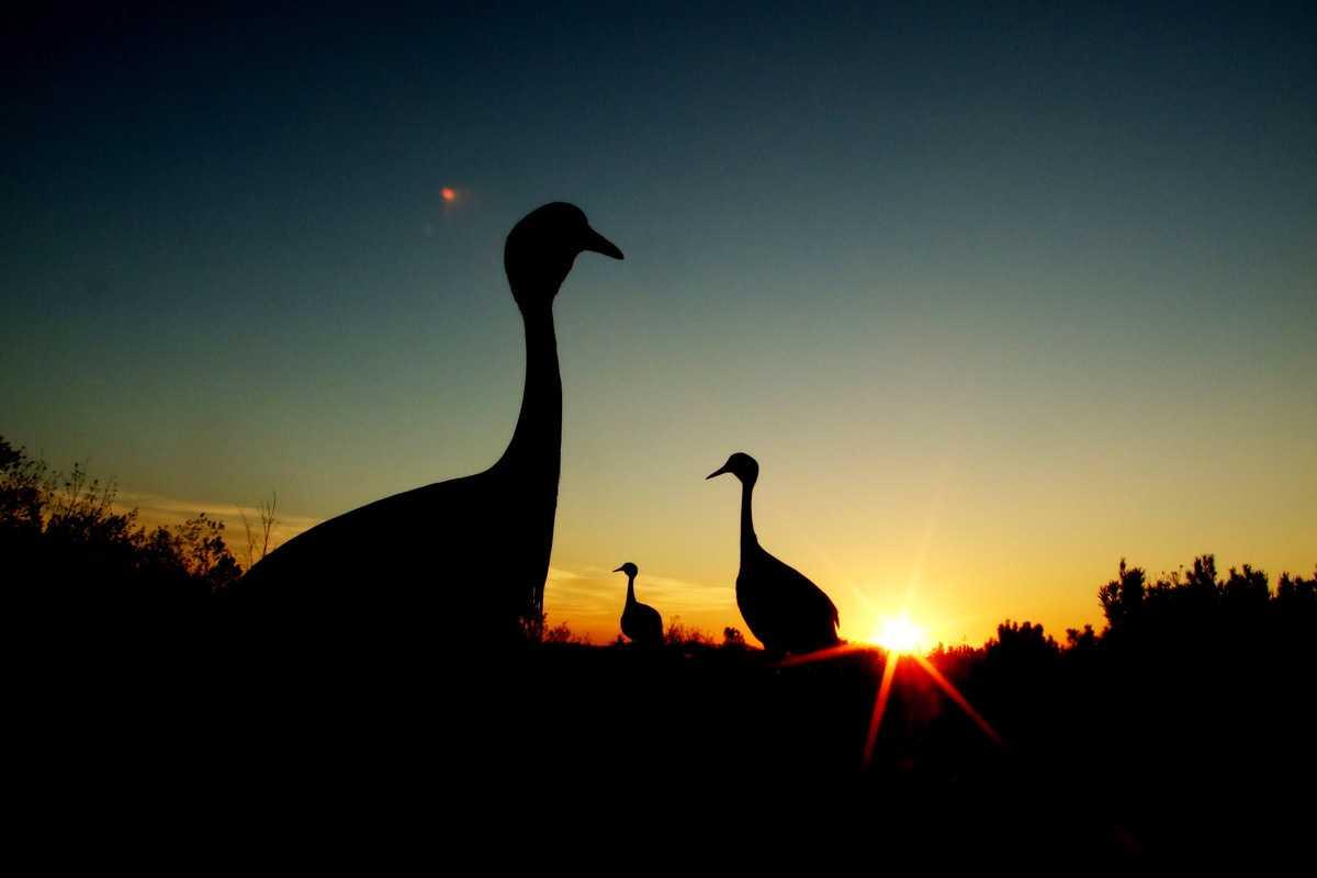Birdlife at Tenikwa