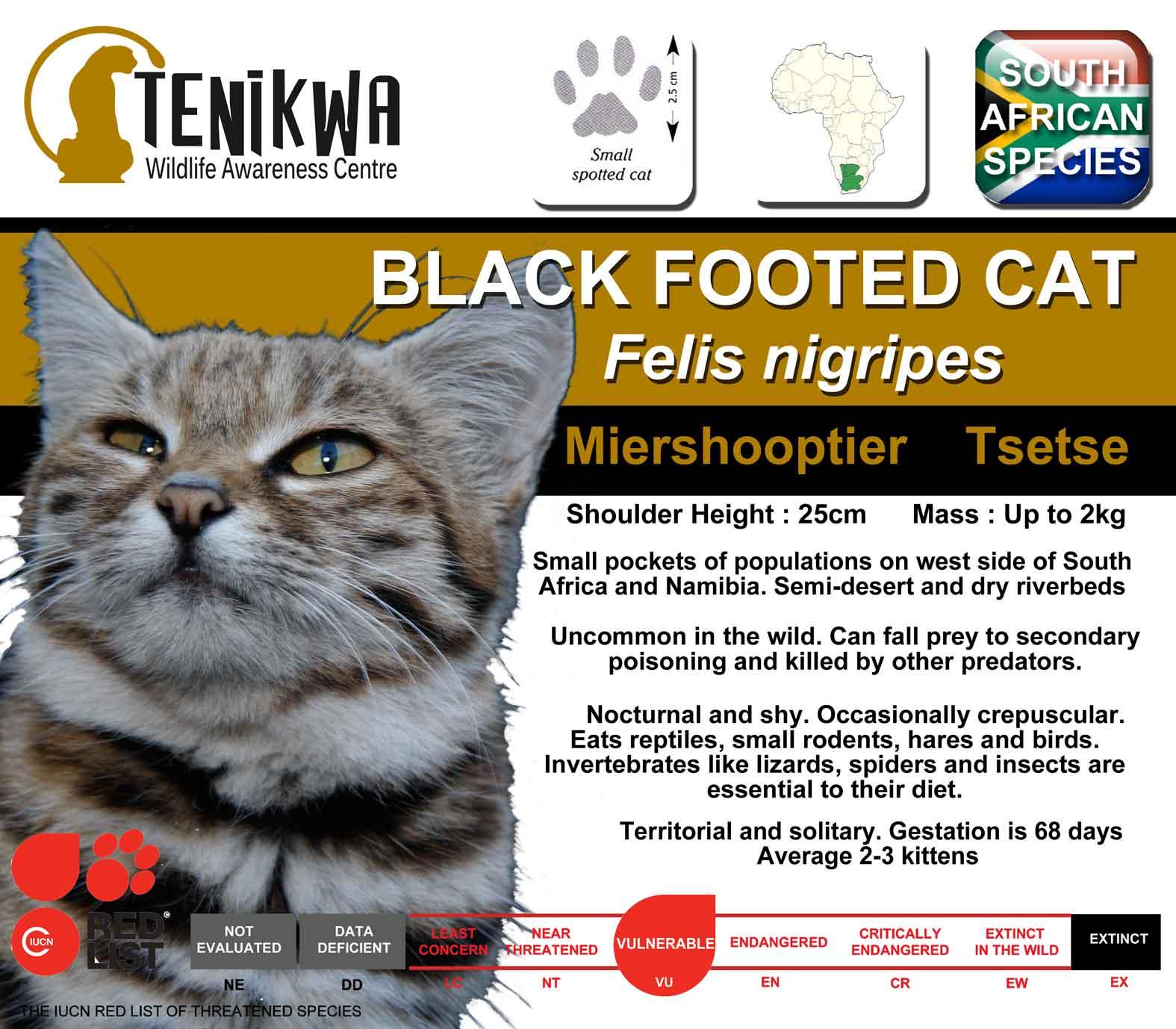 African Wild Cat Fact Sheet