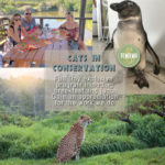 Cats in Conservation Full Day program at Tenikwa