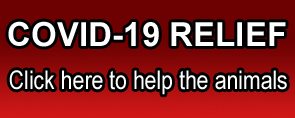 Donate Button during Covid 19
