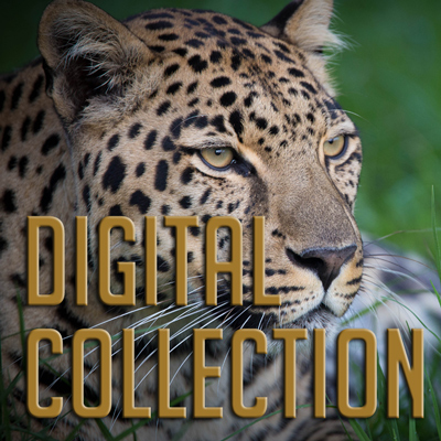 Digital Collection of Tenikwa Images and information on wild cats of South Africa