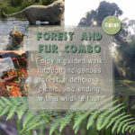 Forest and Fur Combo tour at Tenikwa