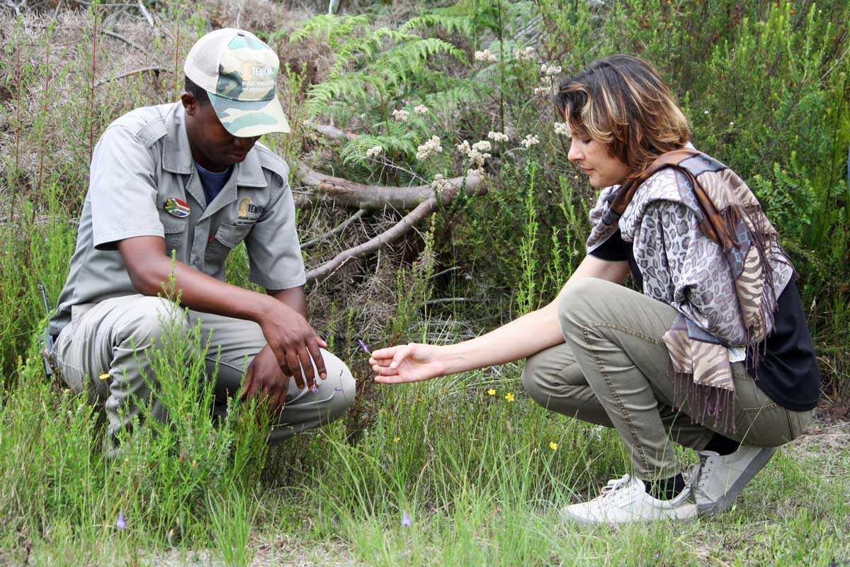 Fynbos at Tenikwa