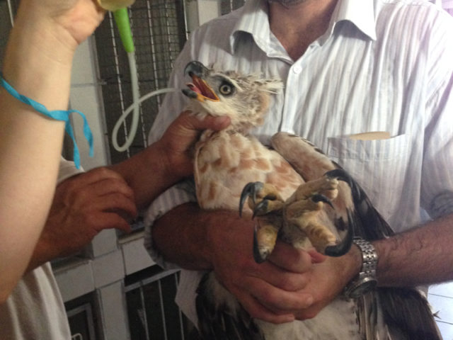 Animal keeping care