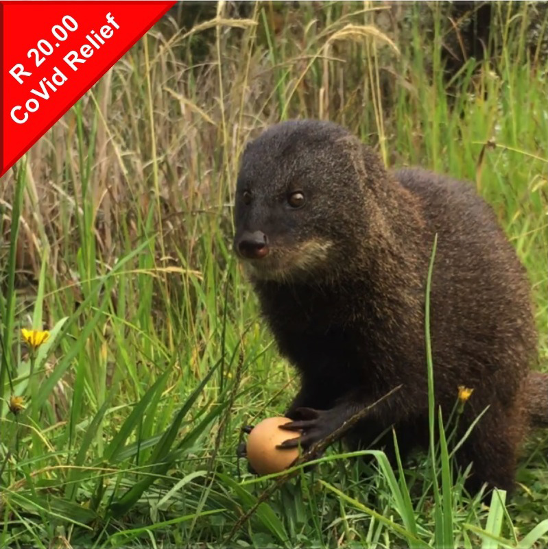 Donate to help feed mongoose during Covid