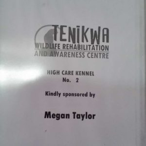 Meghan Taylor