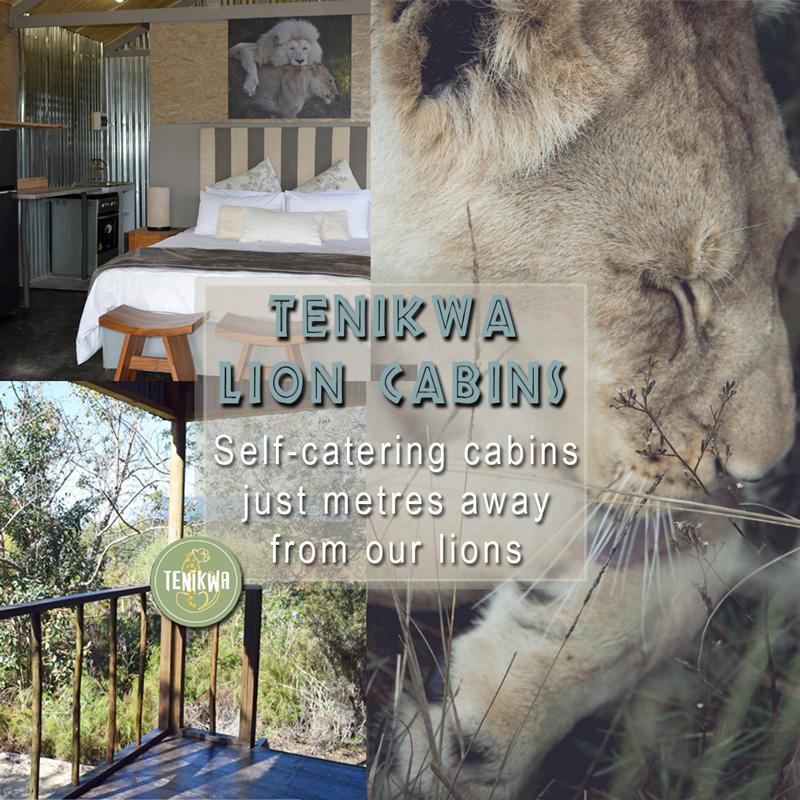 Lion Cabins at Tenikwa