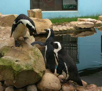 Penguin Rehabilitation