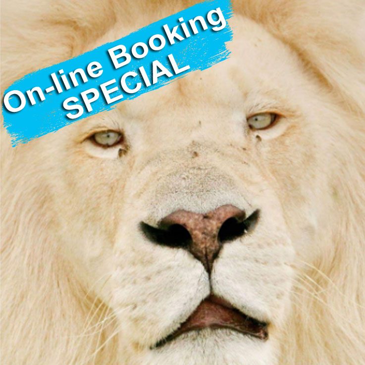 Online Booking Special