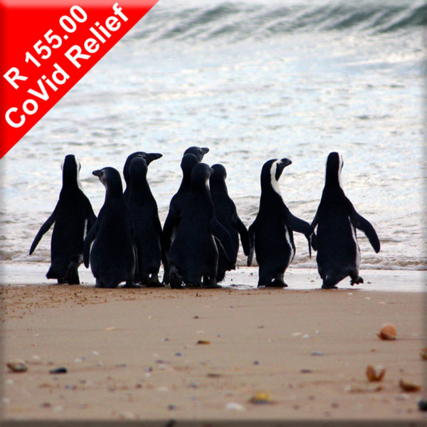 Donate to help feed penguins in rehabilitation during Covid