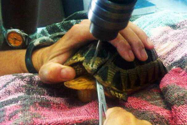 Tortoise treatment