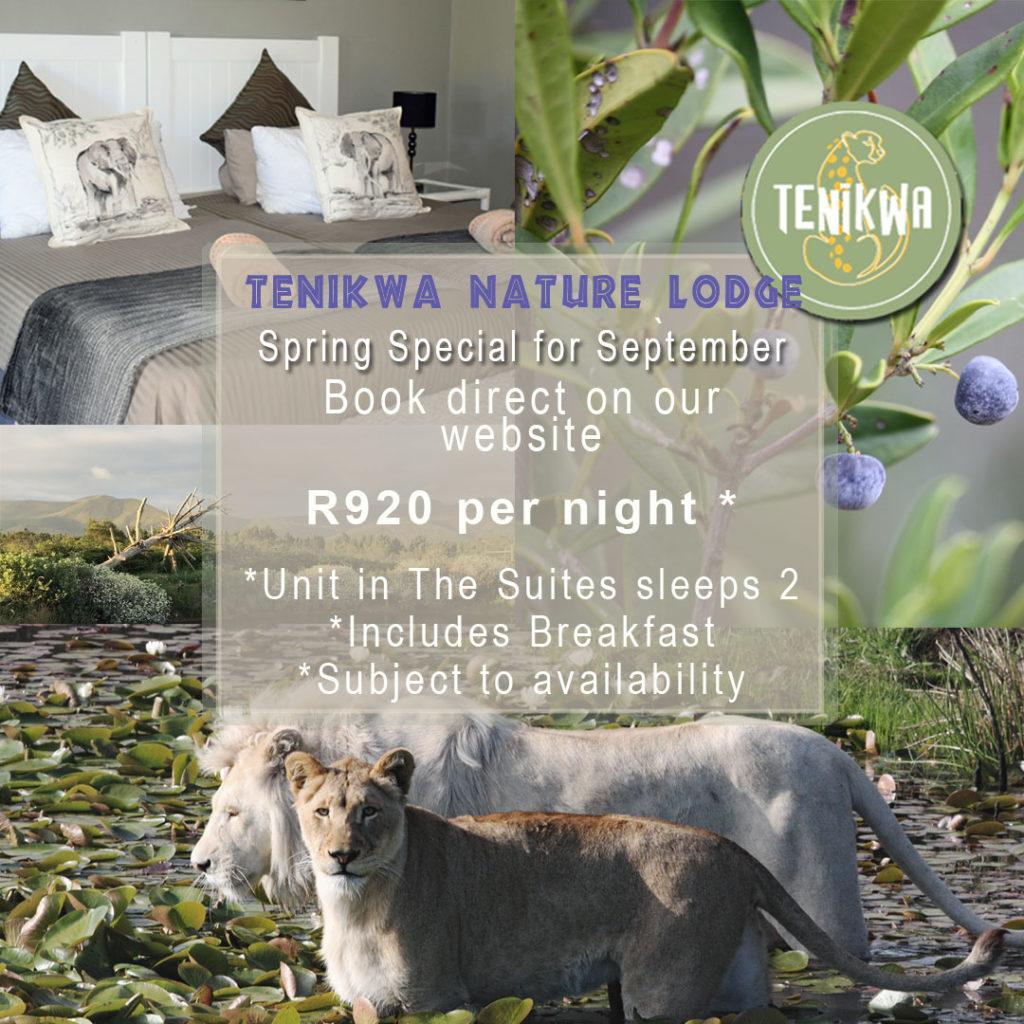 Spring Special at Tenikwa Nature Lodge