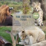 The Private Tour at Tenikwa