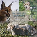 Wild Cat Experience Tour at Tenikwa