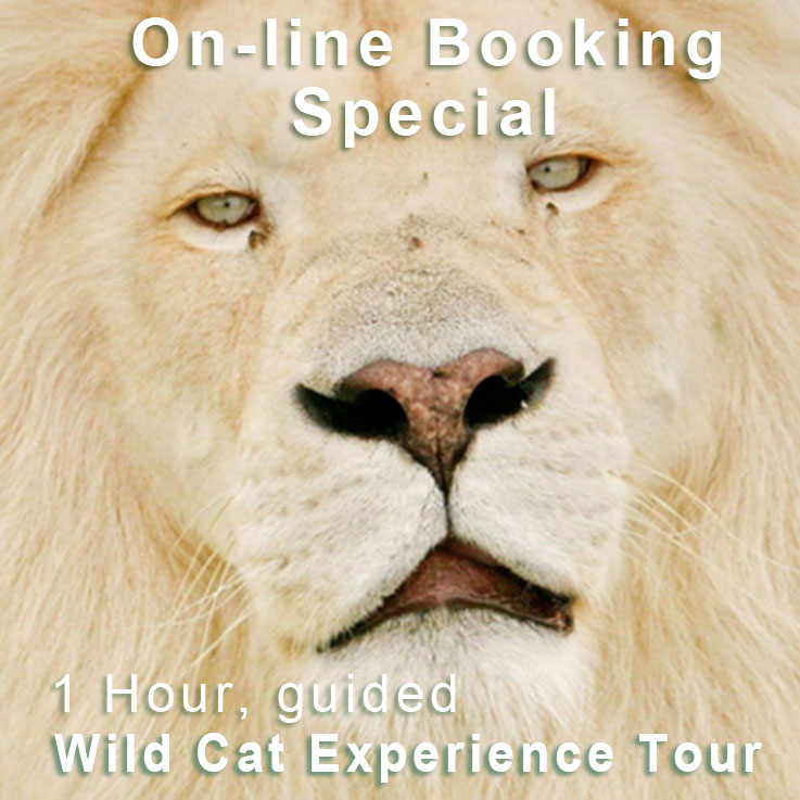 Online Booking Special for 1 hour guided tour at Tenikwa
